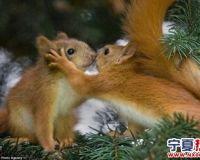 矮油~~萌啊!温馨有趣的动物们